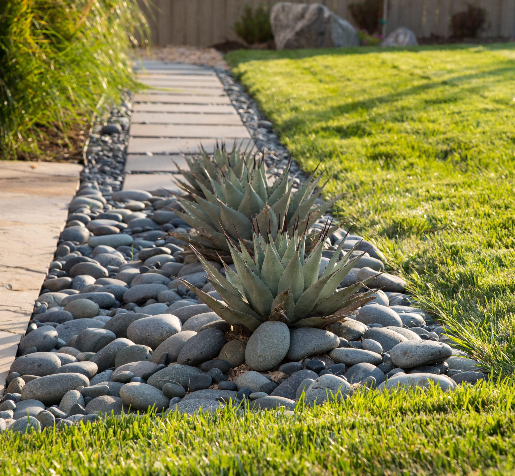 modern landscape design agave plants