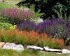 Water-Perennials-2-(large)