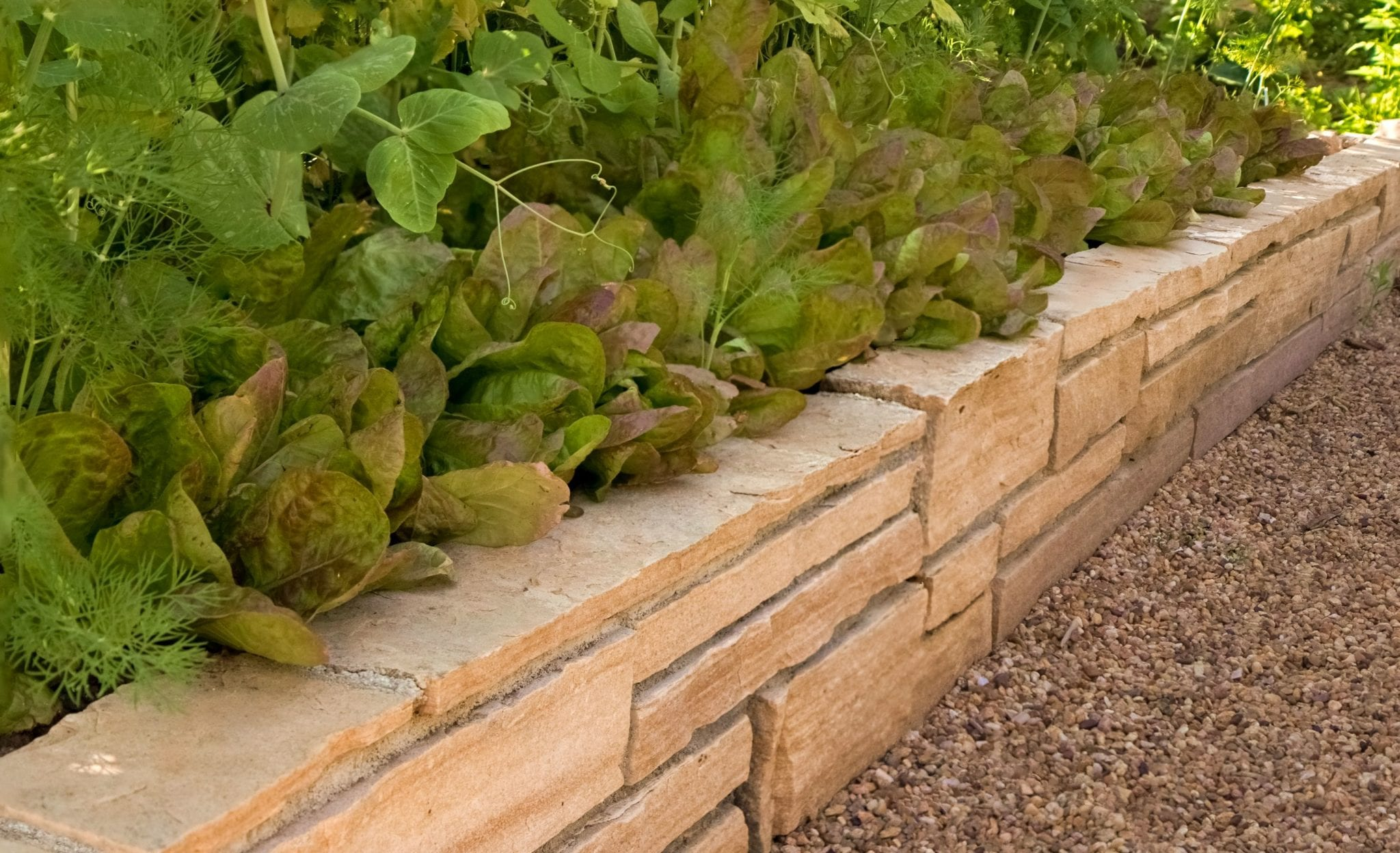 grow lettuce dry stack raised veggie bed