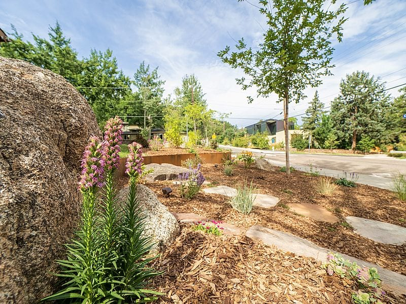 microclimate moss rock boulder native plants