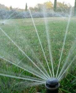 Irrigation photo-tall