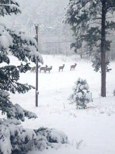 snowy elk scene photo